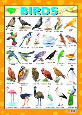 Birds (Chart 43x60)