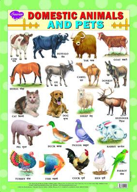 Domestic Animals & Pets (Chart 43x60)