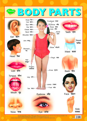 Body Parts (Chart 43x60)