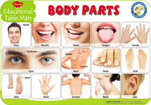 Educational Table Mats Body Parts
